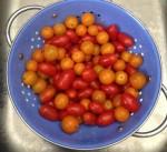 watson tomatoes final
